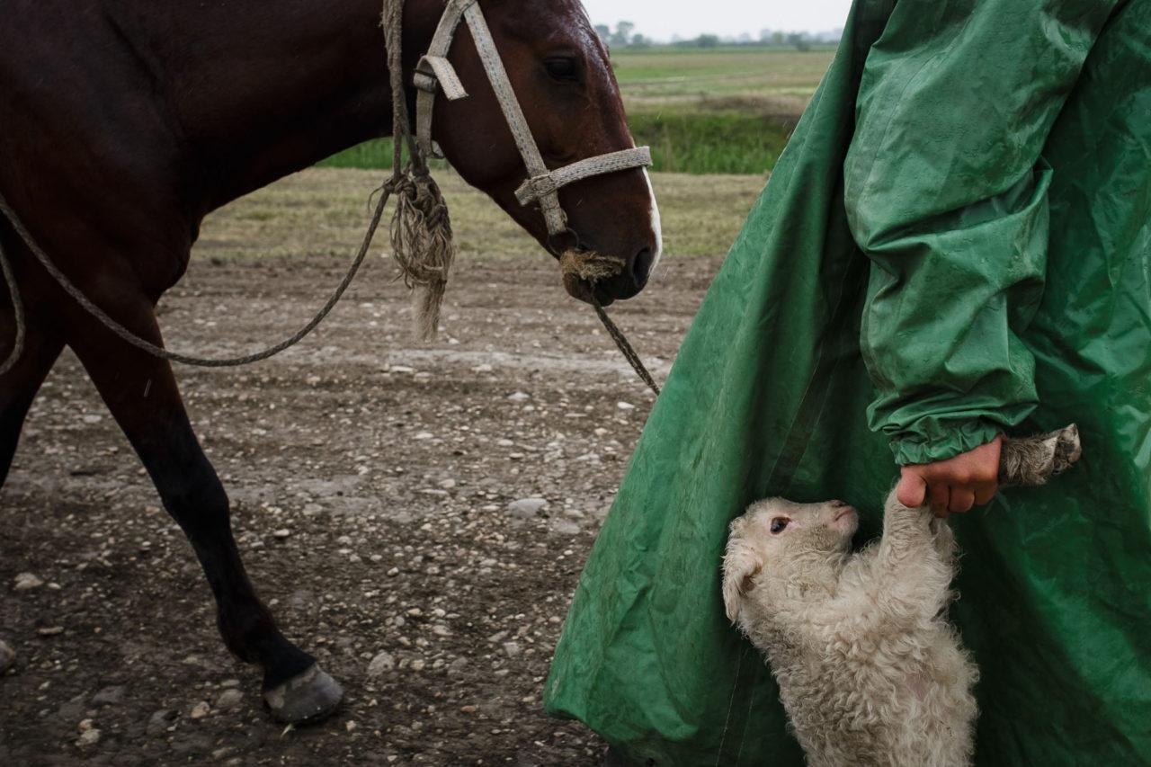 Changirej trägt ein müdes Lamm / Foto © Jewgenija Shulanowa