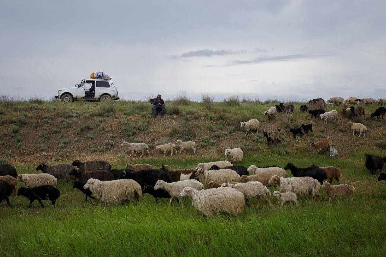 Der Helfer Magomed bewacht die Herde / Foto © Jewgenija Shulanowa