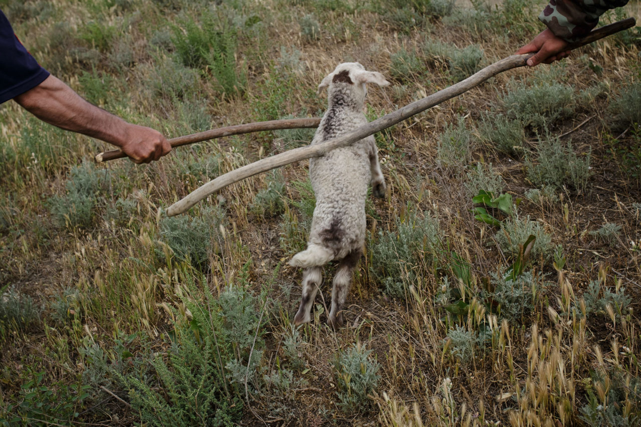 Changirej und Bek treiben ein Schaf / Foto © Jewgenija Shulanowa
