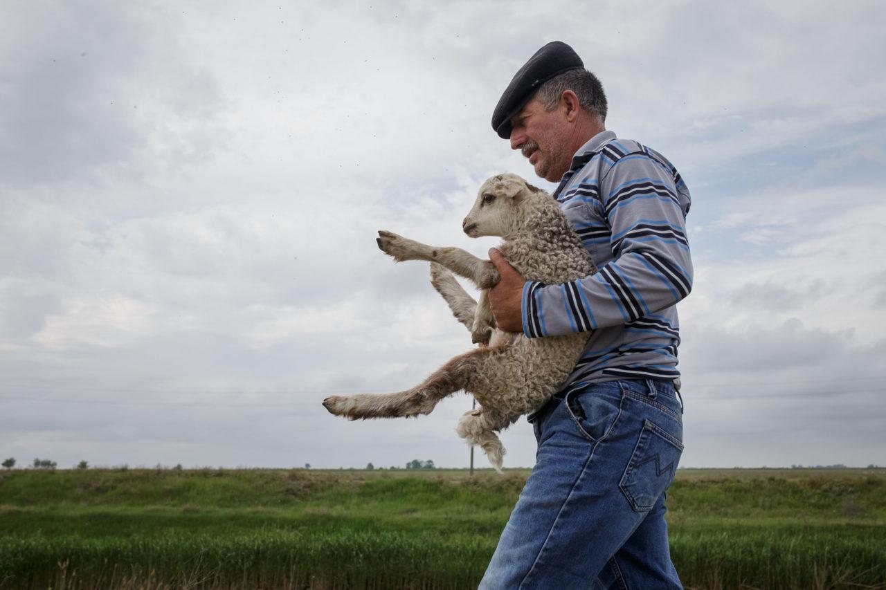 Der Schäfer Chalitbej trägt ein müdes Lamm / Foto © Jewgenija Shulanowa