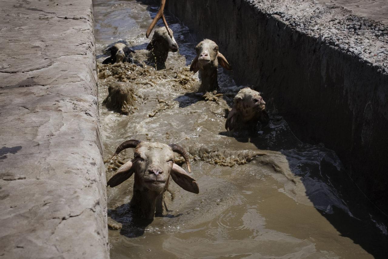 Die Badestelle der Schafe / Foto © Jewgenija Shulanowa