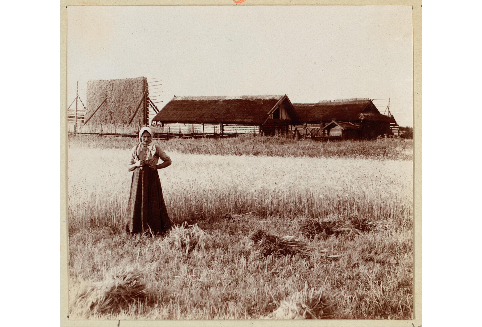 Ernte nahe dem Dorf Bytschi, 1912