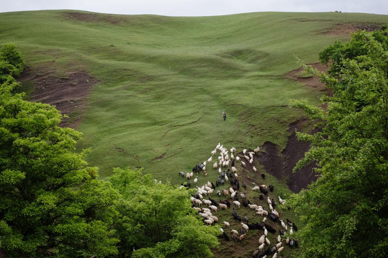 Die Herde / Foto © Jewgenija Shulanowa