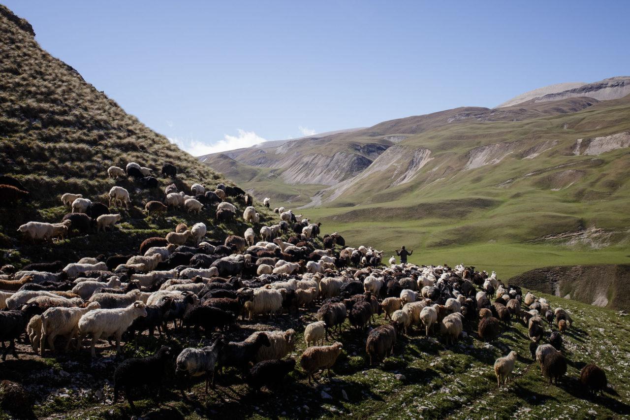 Chalitbej treibt die Herde / Foto © Jewgenija Shulanowa