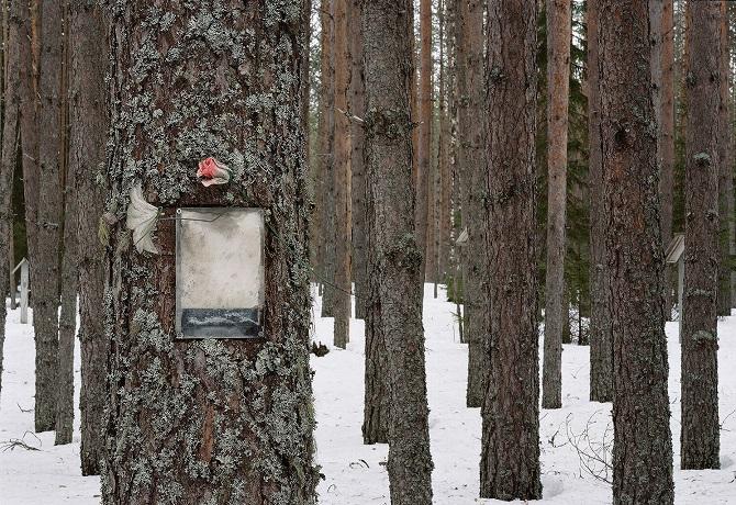 Von jedem Baum blicken mich Menschen an, Schwarzweißfotos / Foto © Tomasch Kisny