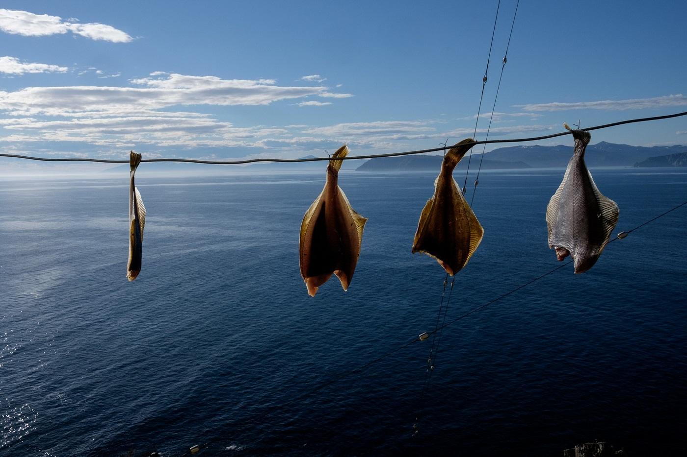Frisch gefangene Plattfische dörren in der Sonne. Das Leben am Leuchtturm läuft weitgehend autonom – einmal jährlich werden Lebensmittel über den Seeweg geliefert