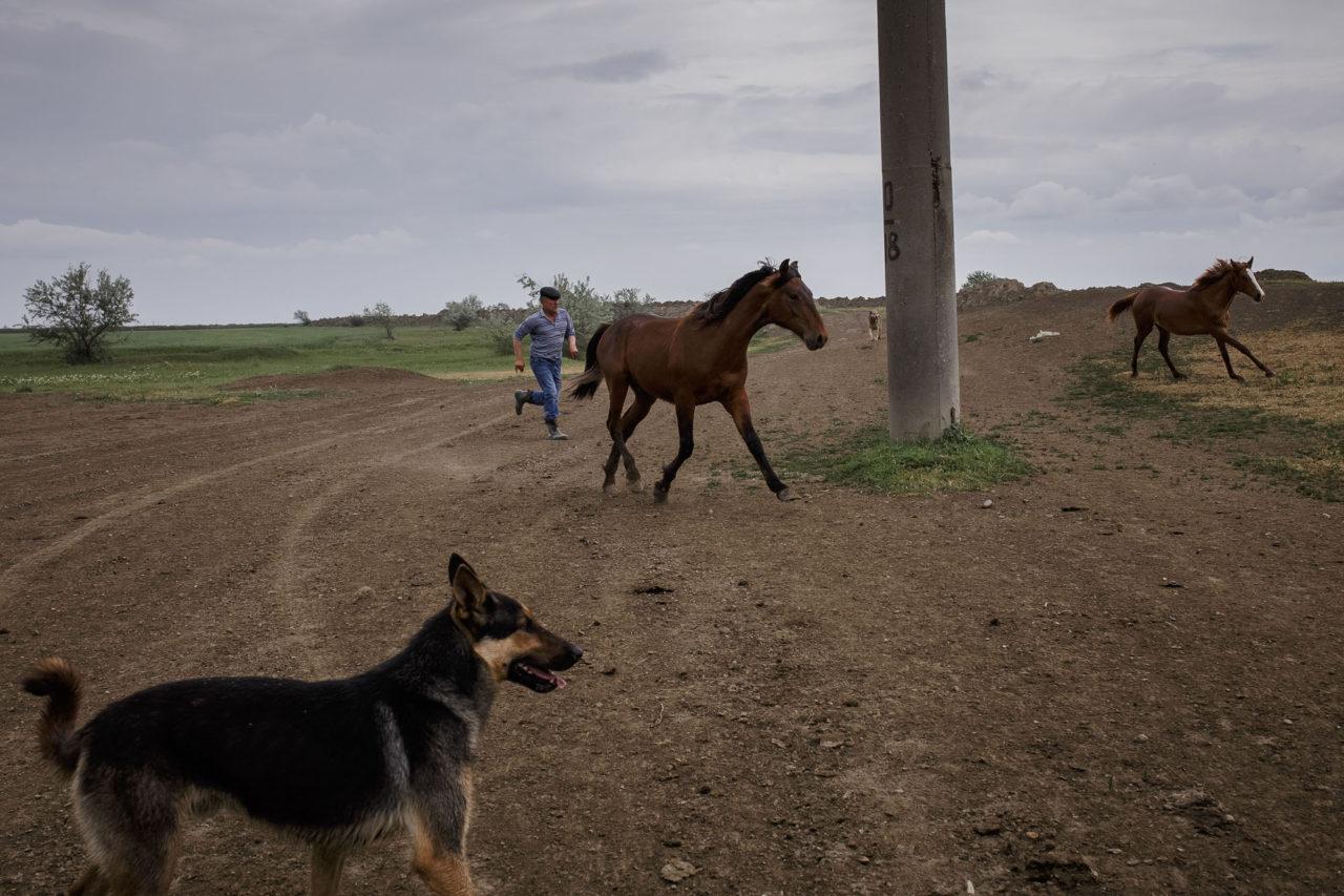 Chalitbej vertreibt seinen Hengst von einem fremden Pferd / Foto © Jewgenija Shulanowa