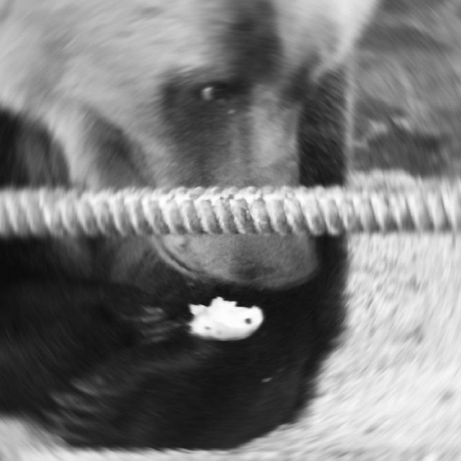 Iwan Stepanowitsch hat extra für mich einen Bären wecken lassen – fast in jedem Lager hier leben Bären / Fotos © Olga Romanowa